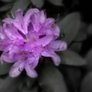 La Fleur Pourpre Art Print