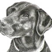 Lab Charcoal Drawing Art Print