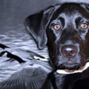 Labrador Retriever Thoughts  Art Print