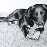 Labrador Samy Art Print