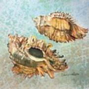 Lace Murex Art Print