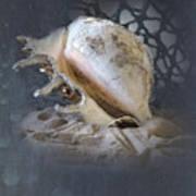 Lace Murex Sea Shell In Blue 2 Art Print