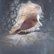 Lace Murex Sea Shell In Blue Art Print