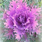 Lacey Plant Art Print