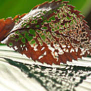 Lacy Leaf Art Print