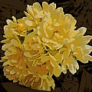 Lady Banks Rose Cluster Art Print
