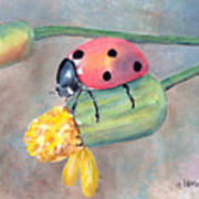 Lady Bug - Lady Bug... Art Print