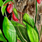 Lady Slippers Art Print