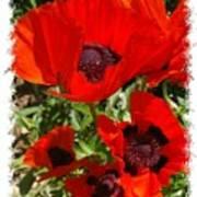 Ladybird Poppy Art Print