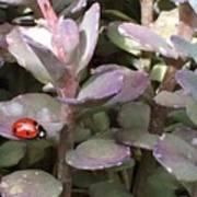 Ladybug Garden Art Print