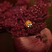 Ladybug In Chocolate Art Print