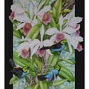 Laelia Purpurata Art Print