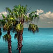 Laguna Beach Palm Trees Near La In Southern California Poster