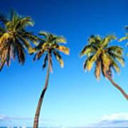 Lahaina Palms Art Print