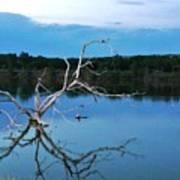 Lake Fryer Tree Art Print