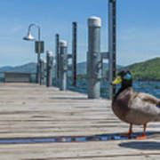Lake George Duck Art Print