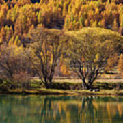 Lake In Autumn - 3 - French Alps Art Print