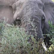 Lake Manyara Elephant Art Print