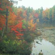 Lake Rohunta Foliage Art Print