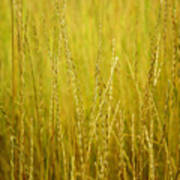 Lake Tahoe Wild Grasses Art Print