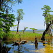 Lake Waccamaw Nc Art Print