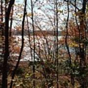 Lake Wallenpaupack Through The Trees Art Print