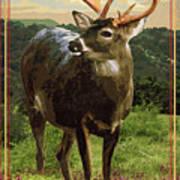 Lake Whitney State Park Art Print