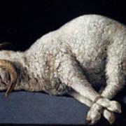 Lamb Of God. Agnus Dei Art Print