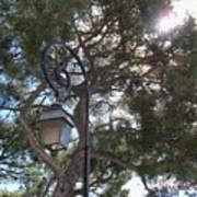 Lamp And Tree Art Print