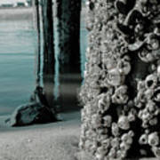 Land Meets Water Nature Photograph Art Print
