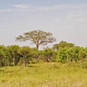 Landscape In Botswana Art Print