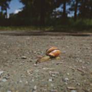 Landscape Of The Snail Art Print
