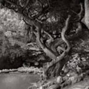 Landscape - The Forbidden Forest Art Print