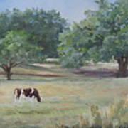 Landscape With Longhorn Art Print