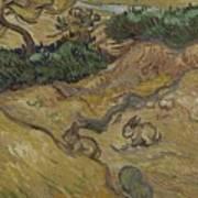 Landscape With Rabbits Saint Remy De Provence December 1889 Vincent Van Gogh 1853  1890 Art Print