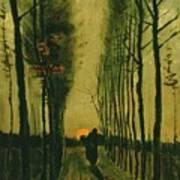 Lane Of Poplars At Sunset Art Print