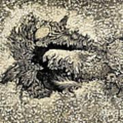 Langleys Sunspot Observation, 1873 Art Print