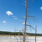 Large Dead Standing Tree In Hot Springs  Art Print