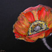 Large Poppy Art Print