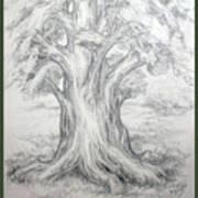 Large Shady Tree Art Print