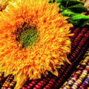 Large Sunflower On Indian Corn Art Print