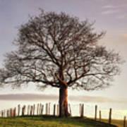 Large Tree Art Print by Jon Baxter
