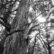 Large Tree Art Print