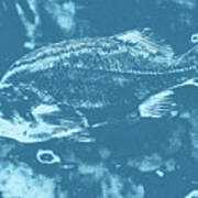 Largemouth Bass 8 Art Print