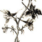 Larkspur  Art Print