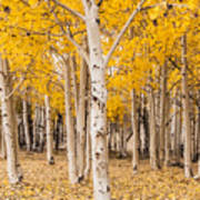 Last Of The Aspen Leaves Art Print