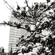 Last Snow Fall  Art Print