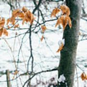 Last Snowy Leaves Art Print