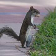 Last Squirrel Standing Art Print