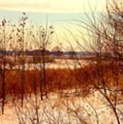 Late Winter at Emiquon Art Print